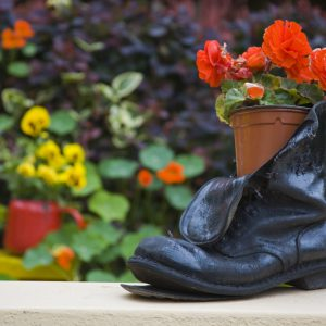 DPI1827209 Glengarriff County Cork Ireland - Close-Up of Shoe Planter in Garden Poster Print by Richard Cummins, 17 x 11
