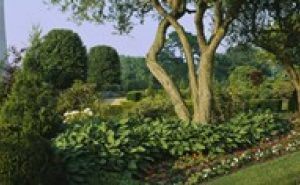 PPI107672L Plants in a garden Bahai Temple Gardens Wilmette New Trier Township Chicago Cook County Illinois USA Poster Print by - 36 x 12